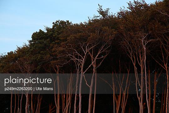 p249m2263200 by Ute Mans