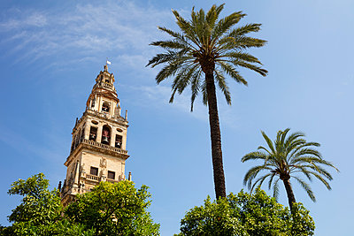 Spain, Andalusia, Cordoba, Torre del Alminar of Mosque?Cathedral and palms - p300m2132651 by Wilfried Wirth