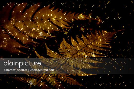 Fern - p1028m1585928 by Jean Marmeisse