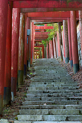 Torii gates and stone stairs; koyasan wakayama japan - p442m700195f by Philippe Widling