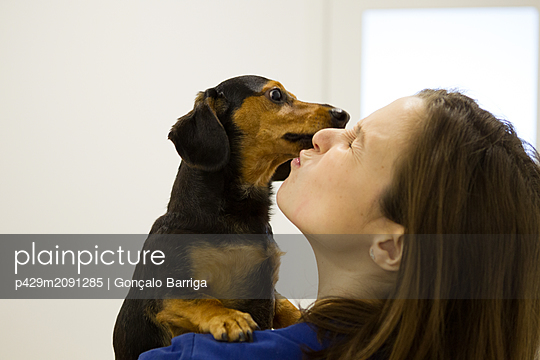 Dog licking veterinarian's face - p429m2091285 by Gonçalo Barriga