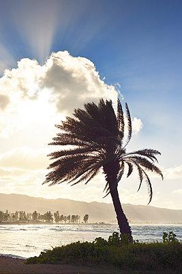 Licht und Schatten am Haleiwa Alii Beach Park, Oahu, Hawaii - p1196m1128166 von Biederbick & Rumpf
