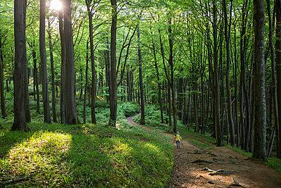 Germany, Mecklenburg-Western Pomerania, Ruegen, Jasmund National Park, hikers in beech forest on hiking trail - p300m2059432 by Maria Maar