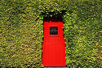 Lorrha, County Tipperary, Ireland; Traditional Irish door - p4429471f by Design Pics
