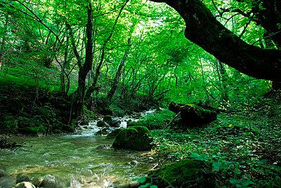 Wald - p56711179 von Le Cercle Rouge