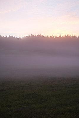 Landschaft im Nebel - p1149m1074284 von Yvonne Röder