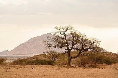 Namibian landscape - p1273m2259821 by Melanka Helms