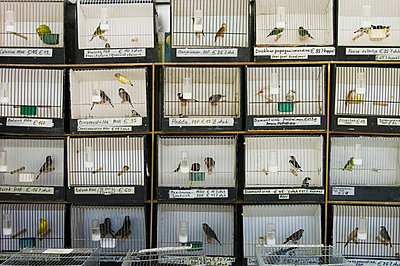 Birds in cages - p3580485 by Frank Muckenheim
