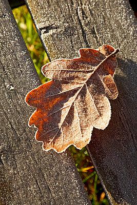 Leaf in the sunshine - p3820193 by Anna Matzen