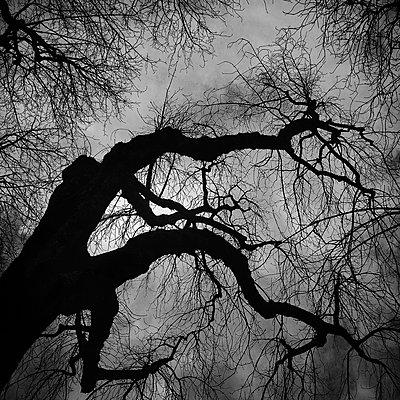 Tree in backlit - p1240m2063336 by Adeline Spengler