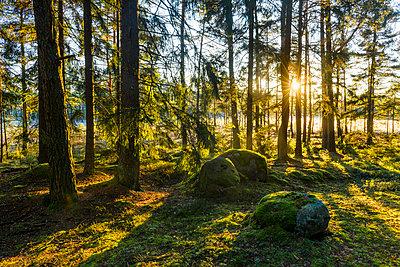 p312m1532957 von Mikael Svensson