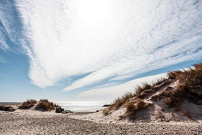 Dune landscape and beach, Jutland, Denmark - p1168m2273450 by Thomas Günther