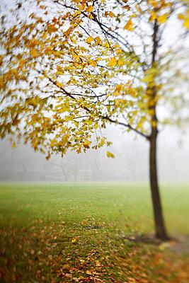 Tree, select focus - p3720428 by James Godman