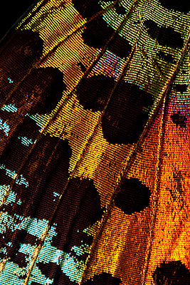 Butterfly wing - p587m2115517 by Spitta + Hellwig