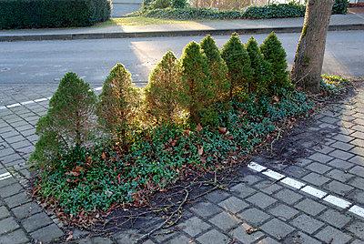 Parkplatzbäumchen - p260m971252 von Frank Dan Hofacker