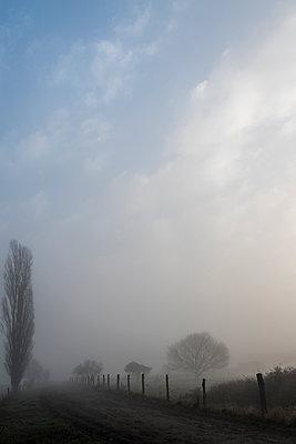 Winter landscape with fog - p739m1092598 by Baertels