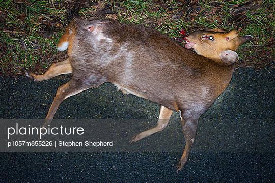 Roadkill - p1057m855226 by Stephen Shepherd
