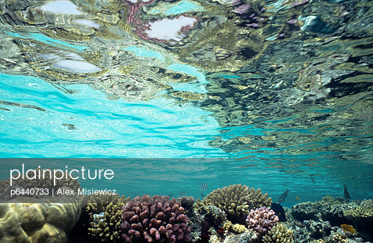 View of coral in shallow waters - p6440733 by Alex Misiewicz