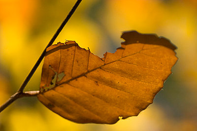 Autumn leaf - p4170079 by Pat Meise