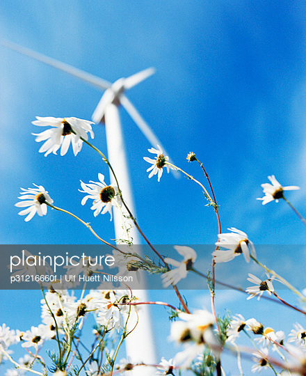 White flowers and a wind turbine Sweden.