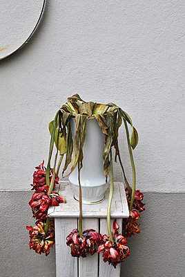Withered flowers in a vase - p1648m2260201 by KOLETZKI