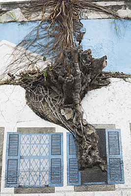 Tree on facade - p596m1563739 by Ariane Galateau