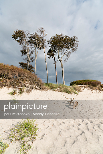 Germany, Darss, Weststrand, Trees on beach - p300m2156576 by Mandy Reschke