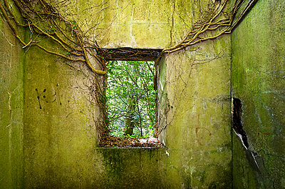 Ivy Growing Through Window Hole In Ruined Building - p1072m993529 by Chinch Gryniewicz