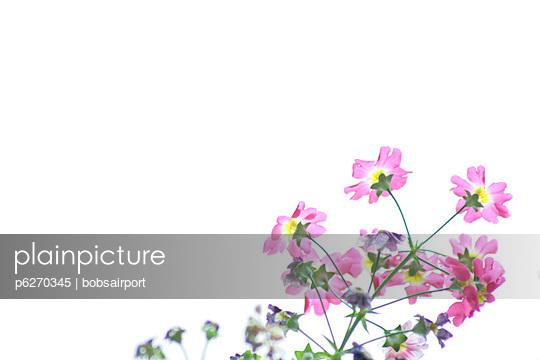 rosa blueten - p6270345 von bobsairport