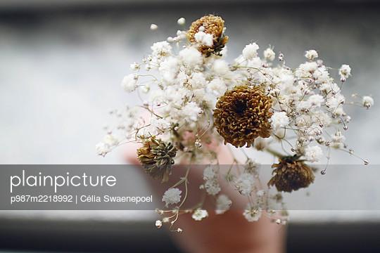 Le bouquet séché - p987m2218992 by Célia Swaenepoel
