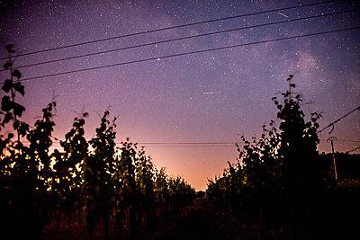 Cosmik Vineyards - p1402m1461984 by Jerome Paressant