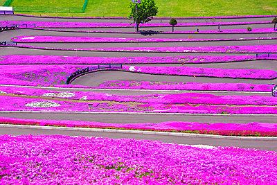 Hokkaido, Japan - p307m962247f by Masaaki Tanaka