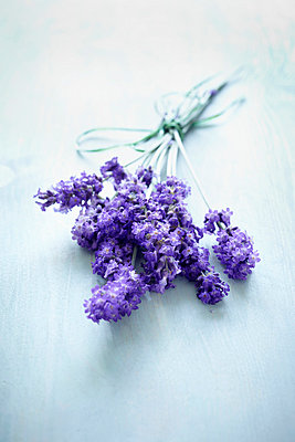 Bunch of lavender blossoms - p464m852273 by Elektrons 08