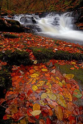 The Moness burn flowing through the Birks of Aberfeldy in autumn, Aberfeldy, Perthshire, Scotland - p871m2068538 by Granville Harris