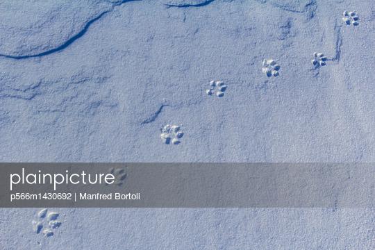 p566m1430692 von Manfred Bortoli