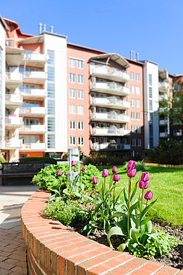 Flowering tulips, buildings in background - p575m805244f by Mikael Svensson