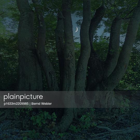 Silent Night II - p1633m2209985 by Bernd Webler