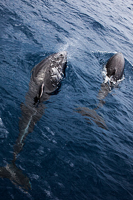 Dolphin - p1291m1465796 by Marcus Bastel