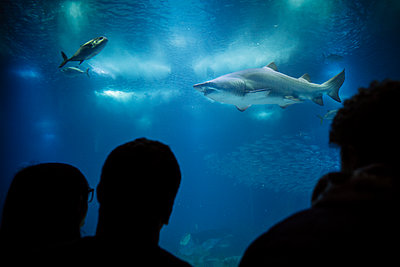 Unterwasserwelt im Ozeanarium II - p1357m2178911 von Amadeus Waldner