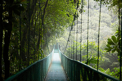 View of hanging bridge in forest - p312m1471902 by Anna Kern