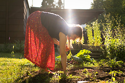 Woman harvesting vegetables from vegetable patch - p924m1422776 by Raphye Alexius