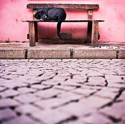 Dog sleeping - p9370163 by Karolina Doleviczenyi