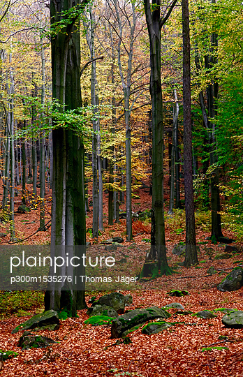 plainpicture | Photo library for authentic images - plainpicture p300m1535276 - Germany, forest in autumn - plainpicture/Westend61/Thomas Jäger