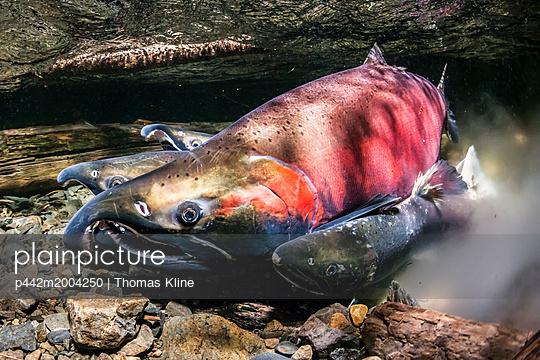 p442m2004250 von Thomas Kline