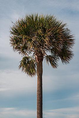 Palm tree - p1335m1586378 by Daniel Cullen