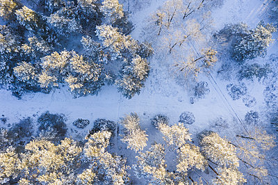 Drone view of snow-covered forest - p300m2264764 by Anke Scheibe