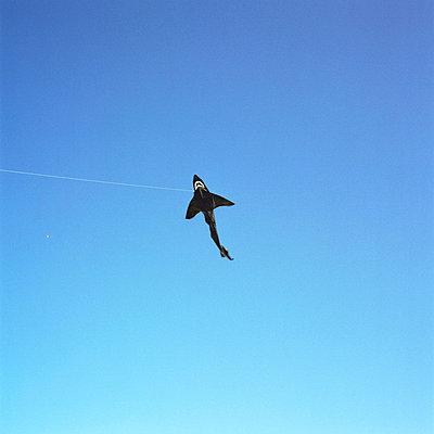 Fliegender Hai - p3420141 von Thorsten Marquardt