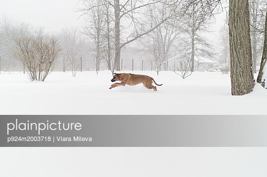 p924m2003718 von Viara Mileva