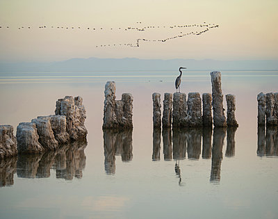 Gray heron on wooden post in sea against sky during sunset - p1166m1193864 by Cavan Images