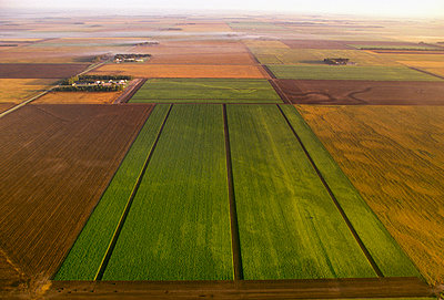 Agriculture - Aerial, sugar beet fields at different stages of harvest / Red River Valley, Minnesota, USA. - p442m905785 by R. Hamilton Smith